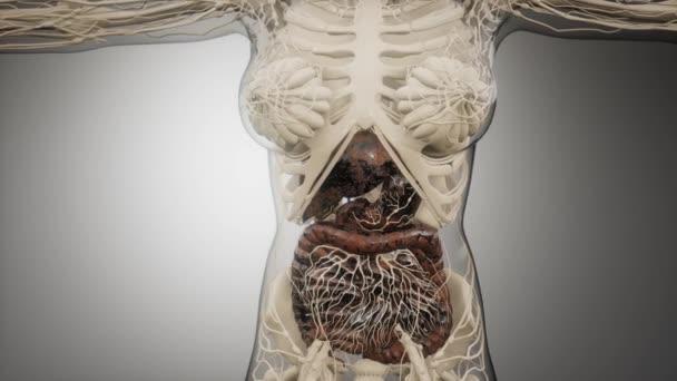 Části a funkce lidského trávicího systému