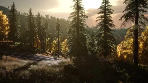 Východ slunce v podzimním lese