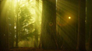 """Картина, постер, плакат, фотообои """"светлячок в туманном лесу с туманом фото"""", артикул 313281448"""