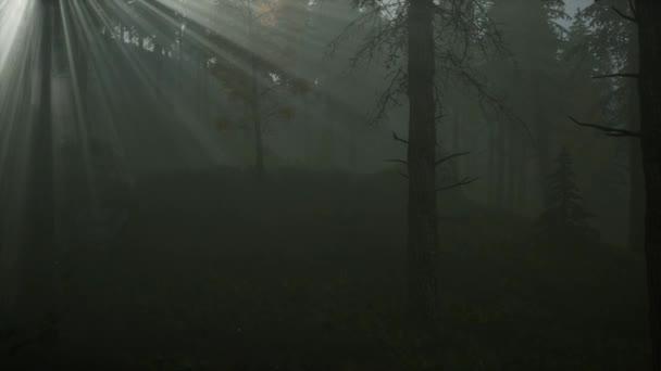 Foresta nella nebbia di mattina di autunno