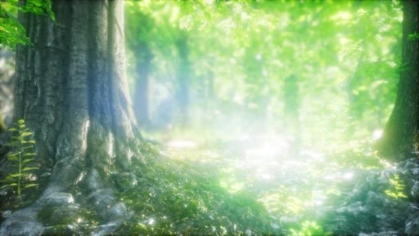 Sluneční paprsky svítí přirozeným lesem buků