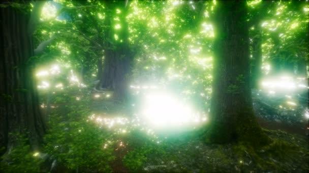 8k Morgen im nebligen Frühlingswald mit Sonnenstrahlen