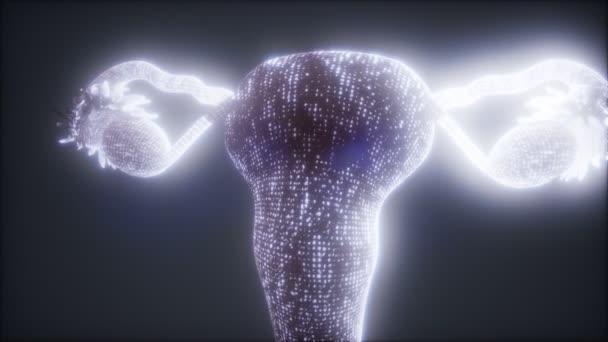 Ženský reprodukční systém anatomie