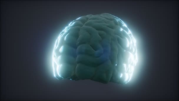 Loop Rotating Human Brain Animation