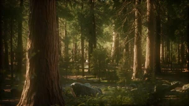 8 KB stromy sekvojovec obrovský v létě v národním parku Sequoia