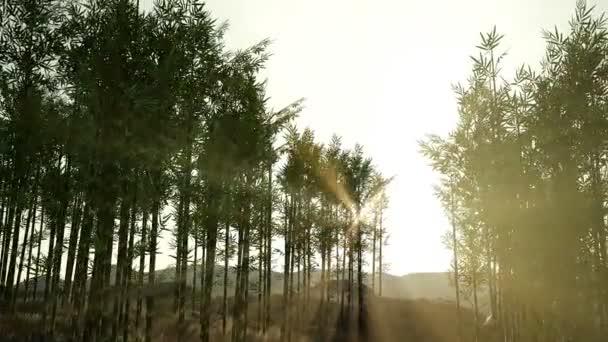 Zelený bambusový Les v kopcích