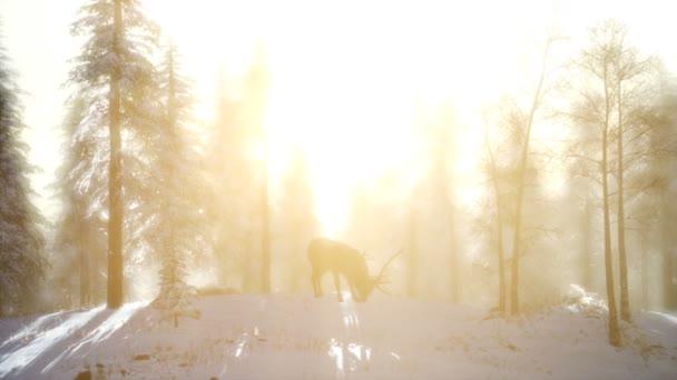 Hrdý, vznešený jelen samec v zimě sníh lese