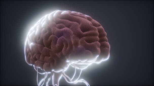 animated model of human brain