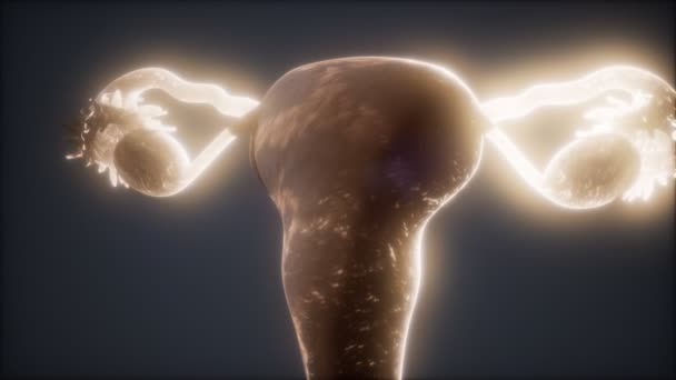 Anatomie des weiblichen Fortpflanzungssystems