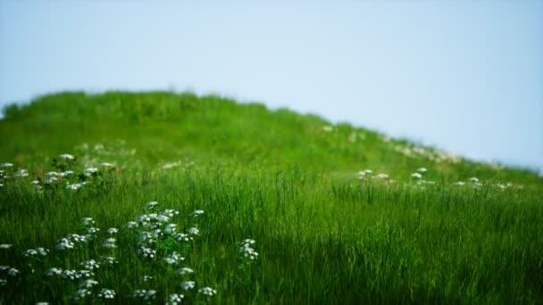 Zöld, friss fű a kék ég alatt
