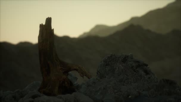 Halott fenyőfa a gránit sziklánál naplementekor