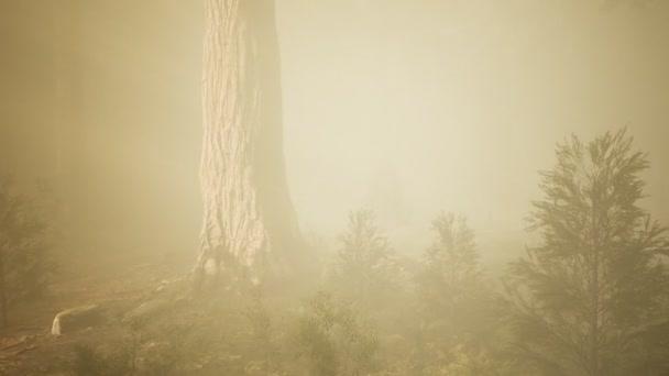 őszi erdő és fák a reggeli ködben