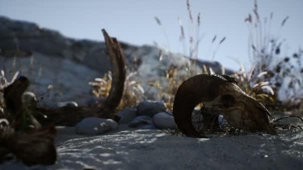 Lebka mrtvého berana v poušti