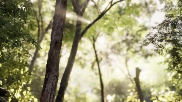 Nebeliger Wald am frühen Morgen
