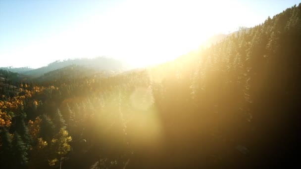 Aerial Drone View Repülés fenyőerdő felett Mountain naplementekor