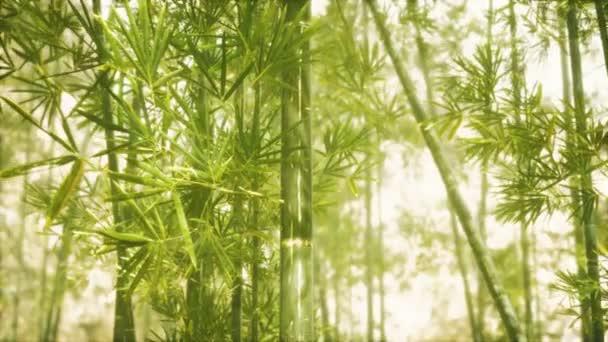 Asijský bambusový les se slunečním světlem