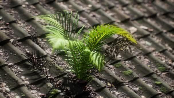 Moos und Farn auf altem Dach