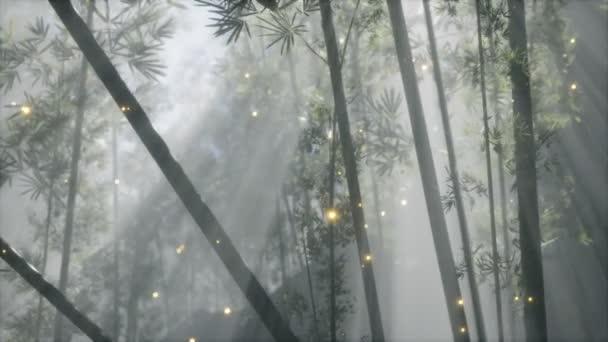 ázsiai bambusz erdő reggeli köd időjárás