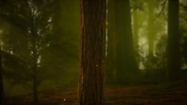 szentjánosbogár ködös erdőben
