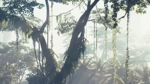 mlhavý deštný prales v mlze