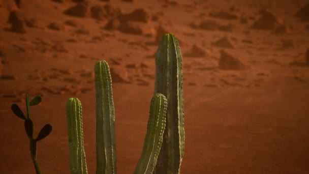 Arizona sivatag naplemente óriás saguaro kaktusz