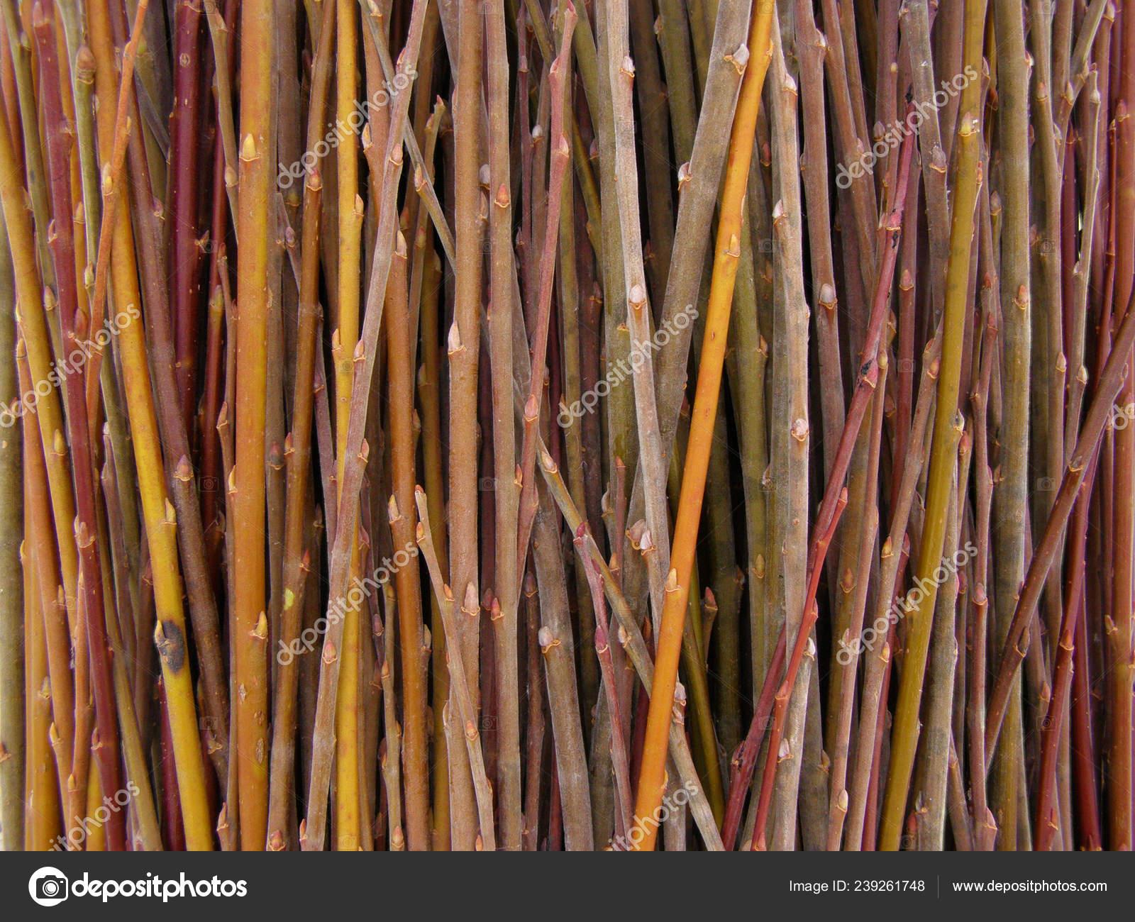 Lot Willow Twigs Raw Material Basket Weaving Stock Photo C Rosinka 239261748