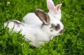 Dva bílí králíci sedící v trávě