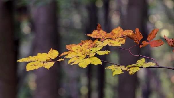 Krásná bukové listí v podzimním lese