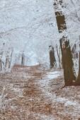 Fehér téli erdőben egy hideg téli napon.