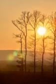 Fényképek Gyönyörű naplemente fény és a fák sziluettje