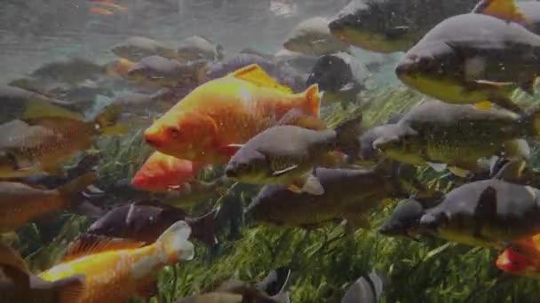 Sok hal, a friss víz