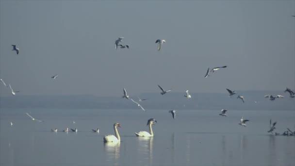 Mnoho racků létání nad vodou v maďarské jezero Balaton v promenádě města Keszthely
