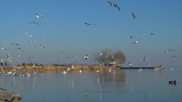 Repül át a víz egy magyar lake Balaton Keszthely város sétányon sok sirályok