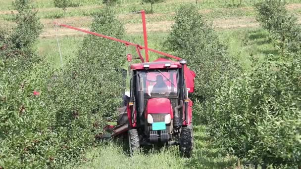Cherry orchard farmers with tractor and harvesting machine agriculture
