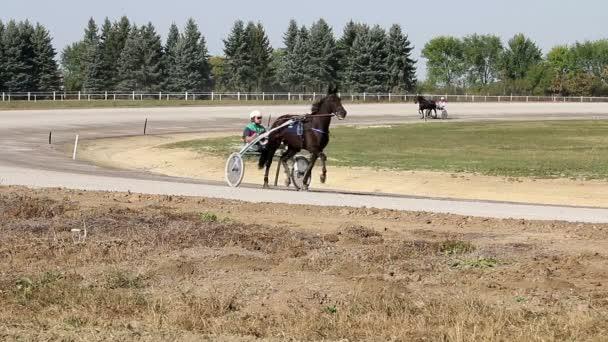 Trotter plemeno koně v pohybu Klusácké dostihy v Hippodrome