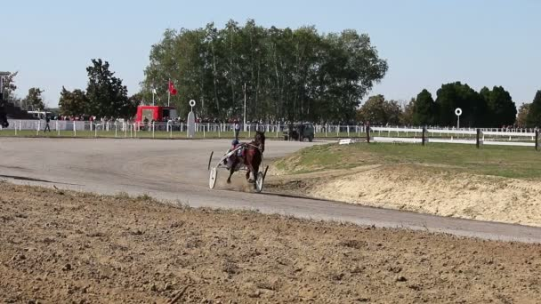 Pferde-Traber-Rasse in Bewegung Trabrennen