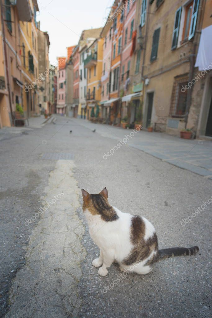 Cat on the street - A cat in a charming street in Vernazza, Liguria, Italy.