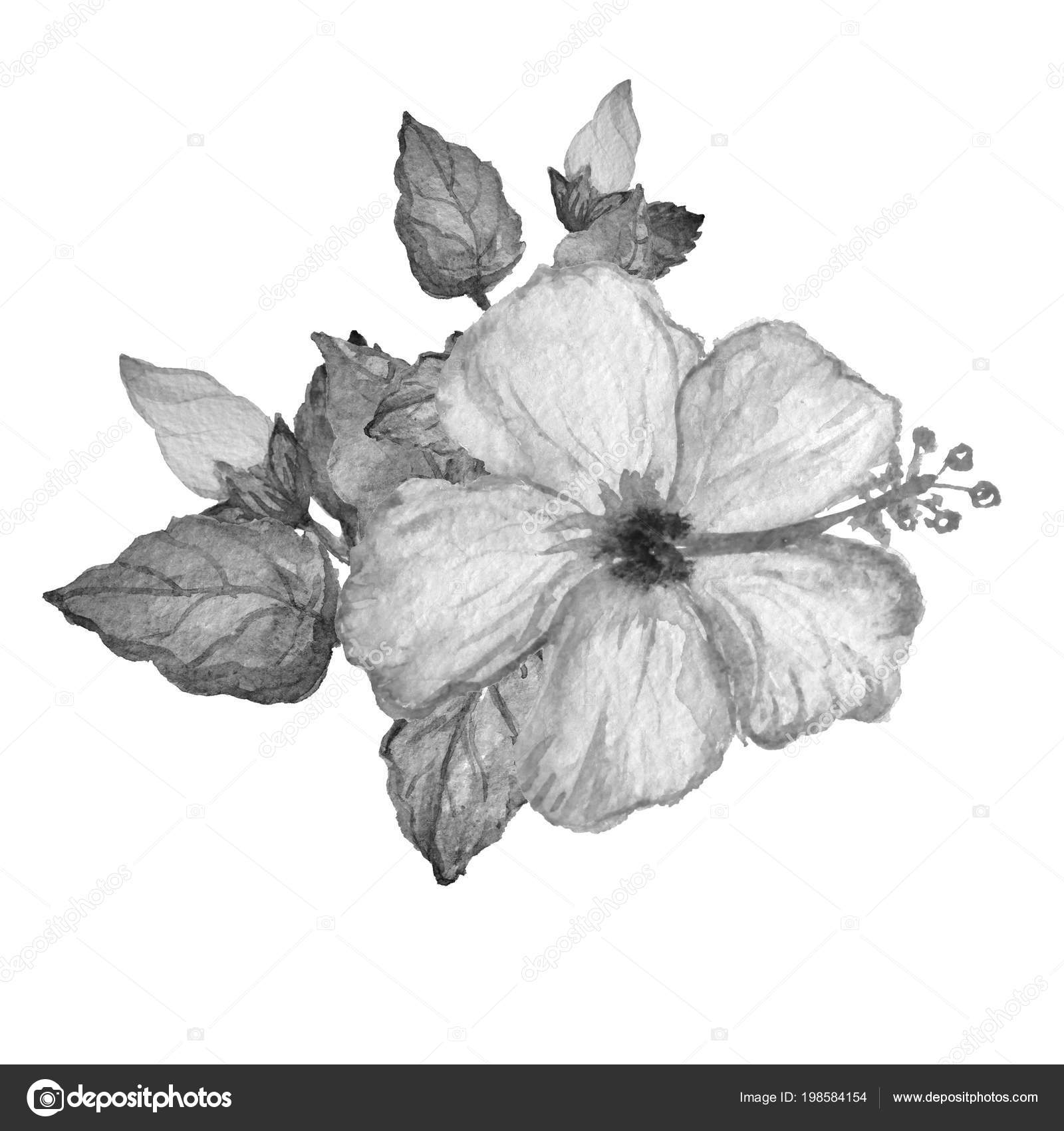 Decorative Watercolor Hibiscus Flowers Clipart Design Element Can