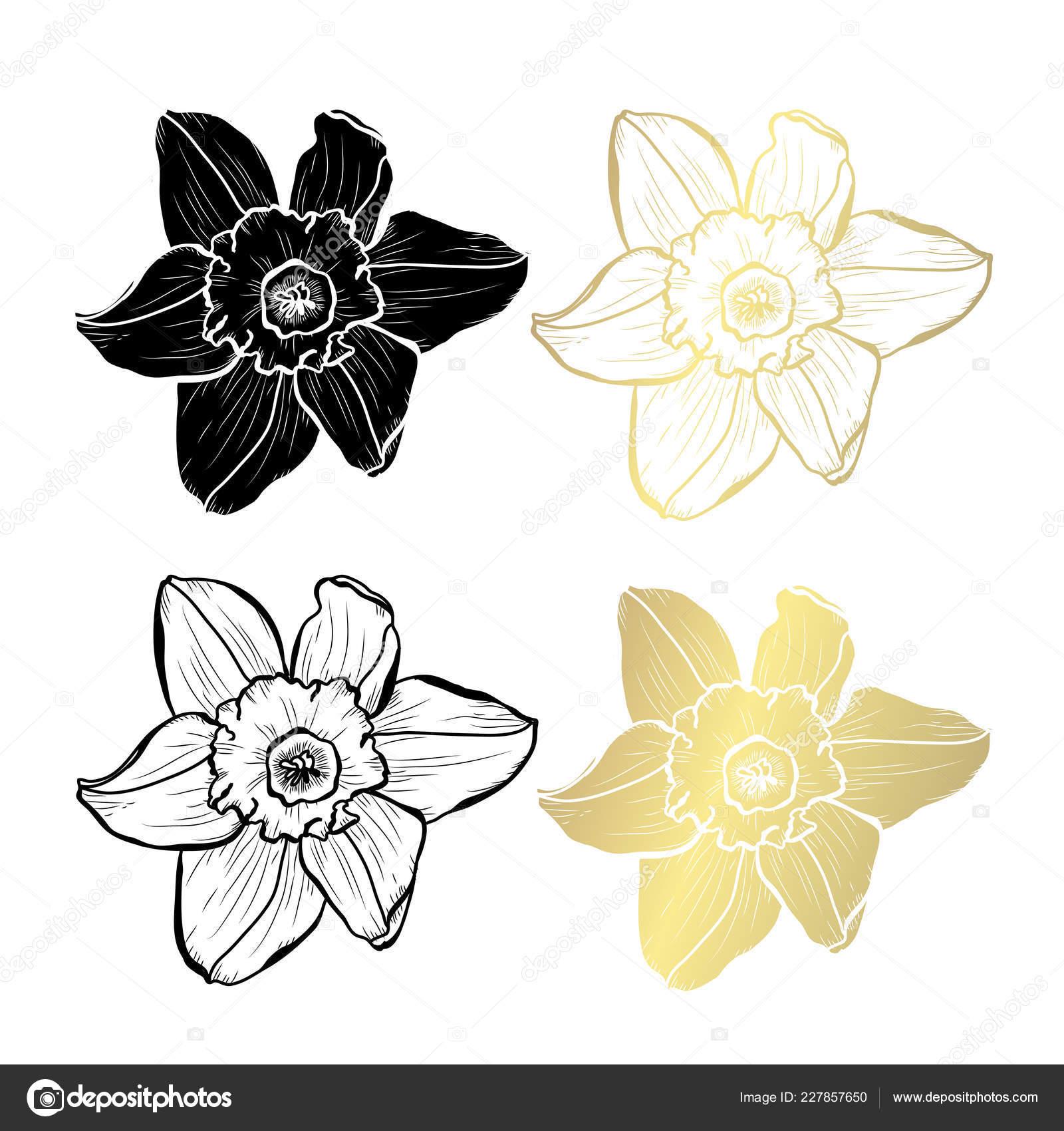 Dekoracyjne Kwiaty żonkila Elementy Projektu Mogą Być
