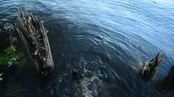 Malá oblast vodní život