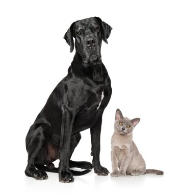 Cat and dog together posing on white background. Animal themes