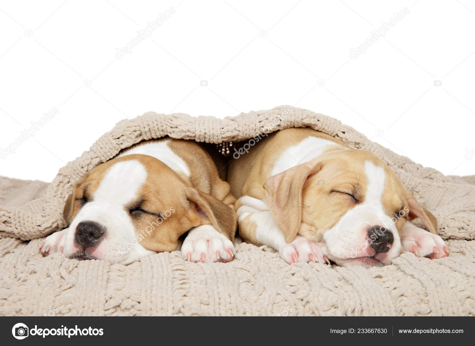American Staffordshire Terrier Puppies Sweetly Sleep Blanket