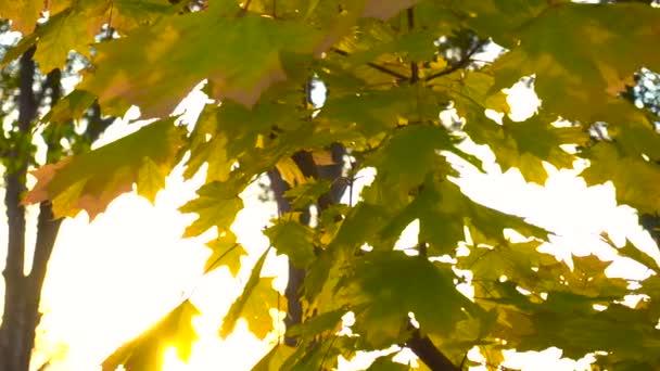 slunce svítilo podzimní listí