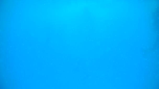 Delfíni v hluboké modré moře