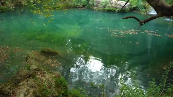 Green calm water in pond