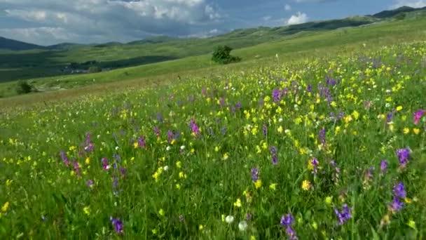 Kamera, mozgás a gyönyörű alpesi tájjal, friss zöld rétek és a virágzó virágok. Gömbcsuklós lövés. Uhd, 4k