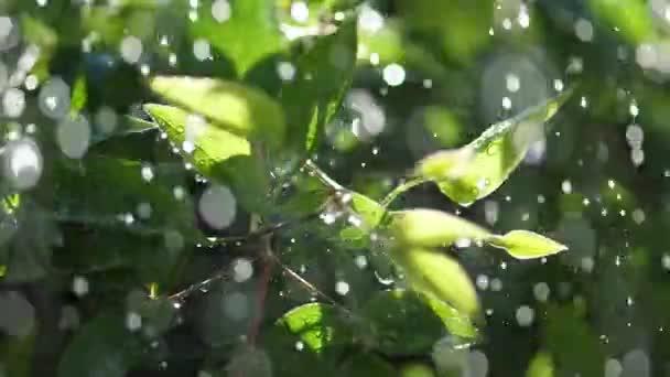 Zpomalený záběr myriády dešťové kapky na zelené listy rostlin