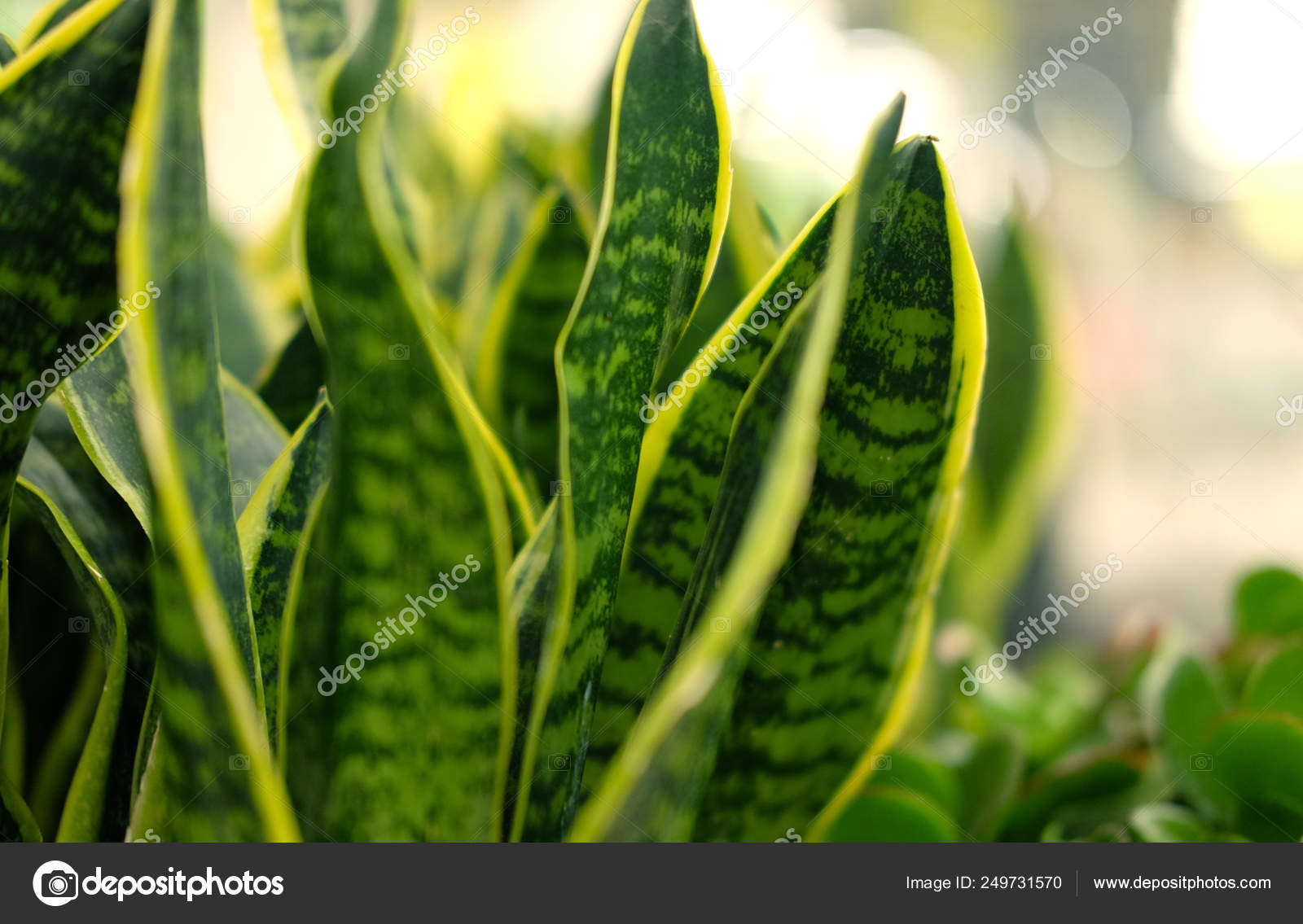 Green Plants In Pots In Garden Store Spring Stock Photo Image By C Juice Team 249731570