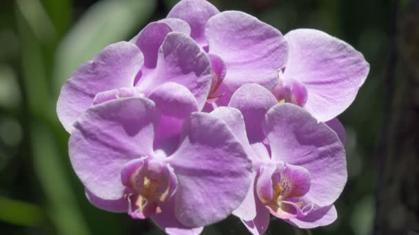 Orchid flower. The Orchidaceae are a diverse and widespread family of flowering plants