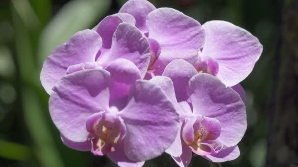 Květ orchideje. Orchidaceae jsou rozmanité a rozsáhlé čeleď vyšších dvouděložných rostlin